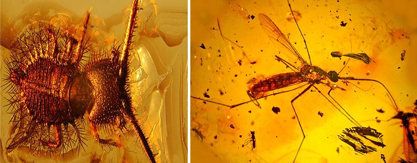 насекомые застывшие в янтаре